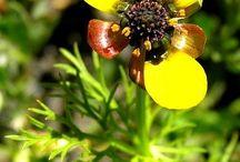 Flores y plantas  populares de Canarias