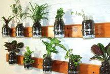 Kitchen Herb Ideas