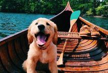 dogs o n holidays