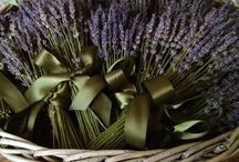 For the Love of Lavender / Dried Lavender could be the answer for your wedding party! Lavender can be used for bouquets, boutonnieres, corsages, ceremonies and reception decor! Also makes great take home gifts..
