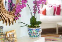 orquidea radiante, color de moda en decoracion para 2014 / Este color es una mezcla de violeta y fucsia, según el prestigioso instituto del color pantone, aunque también siguen presente los colores pasteles.