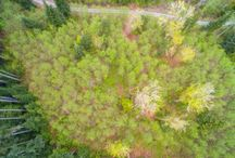 Active Listings: 100 Lot 8 201st Ave NE, Snohomish 98290 / Secluded, slightly sloping custom home site on a private drive. Shared well hookup available. Septic designs can be re-approved using the original design company for around $2,300. Critical areas have been marked. Bring your builder! Buyer to verify all information to their satisfaction