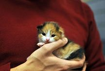 New Kitten Care / This baby hairball is eating destroying everything! Learn tips and instructions on how best to raise the kitty.