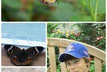 Preschool - Butterflies