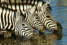 Mamíferos / Imágenes sorprendentes que harán las delicias de los amantes de los #mamíferos  #Animales #Naturaleza