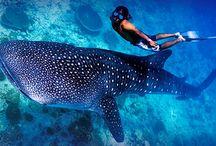 Diving / Las mejores imágenes de Buceo y Submarinismo! Consulta los vídeos de Buceo en el paraíso!
