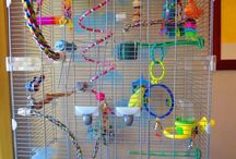 budgies their toys and anything else