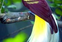 Birds Of Paradise & Colourful Birds