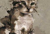 Best of Cats