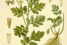 Láminas botánicas