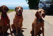 MeinFerienhund  Ferien mit Hunden / Der Blog für Menschen mit Hunden.