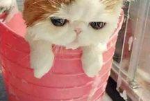 にゃんこ(ФωФ) cats