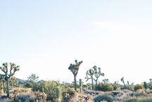 desert dreams.