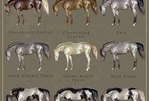 définition  de  la  couleur  des  chevaux  et  de  leur  morphologie