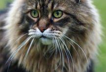 Cats / by Linda Darlington-Bath