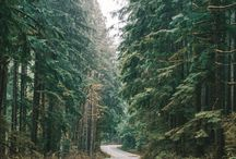 Forest, Roads & Nature