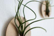 Airplants / Plantas aéreas para decorar e inspirar!