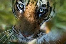 Johannesburg Wildlife / The Johannesburg Wildlife provides you all the wildlife places within the Johannesburg province.