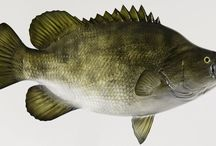 #ladyangler bucket list #fishon / by Melissa Walters