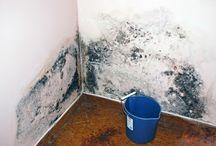 Comment éliminés moisissures sur les murs
