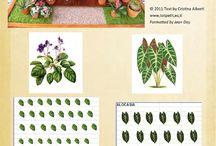 como hacer plantas minis.