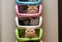 Cats, Cats, Cats / You can never have too many cats.  / by Chiyo Cantral