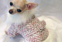 одежка для собаки