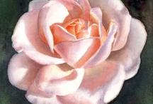 z Rosa růže III