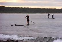 Stand Up Paddling in Jervis Bay / The adventures of SUP riding in Jervis Bay - discover wildlife, surf, play, surround yourself with dolphins and nature. One of the best and funnest ways to discover Jervis Bay's natural, untouched beauty.