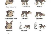 Perros signos de miedo
