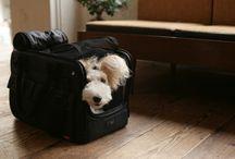BAG / Bag for dog