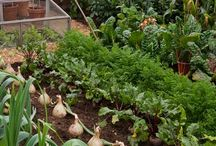 Perfect Potagers