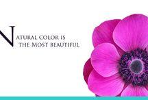 Graphic design / cute flower graphic design