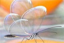 Butterflies / by Connie Schultz