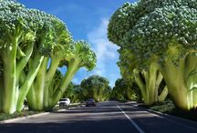 Trees that look like broccoli. / Why not? / by Legal Nomads