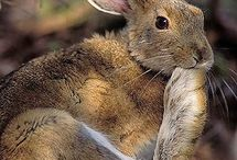 Zajačikovia