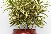 Indoor plants mostly