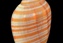 crisanne shells