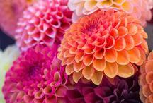 flowers / ...make me smile