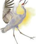 I Love Birding / by Sandy Bigelow
