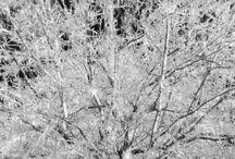 Instagram https://www.instagram.com/p/BOICnfrB_Nv/ December 17, 2016 at 11:52AM #icetree still more ice!