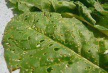 plagas y enfermedades jardin
