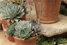 Succulents Gardens / by Brooke Watrous- Nosek