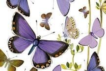 НАСЕКОМЫЕ / Всякие бабочки, жучки, сверчки и прочие насекомыши...