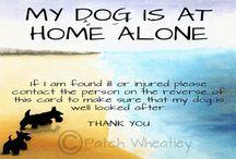 Pet Alert Cards