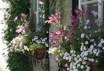 Window Box / by Angelia Sanfilippo