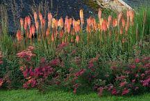 garden \\ colour \\ vivid