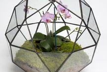 Geometrical terrarium