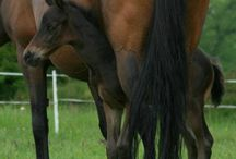 Horses / All kinds!! / by Peggy Corrente