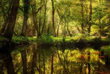 The New Forest National Park / Национальный парк Новый Лес, графство Хэмпшир, Англия.